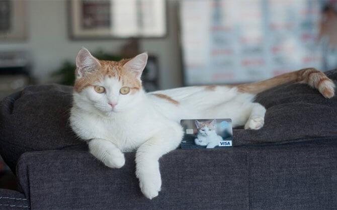The PETA Visa® Rewards Credit Card
