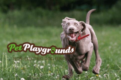 Pet Playgrounds