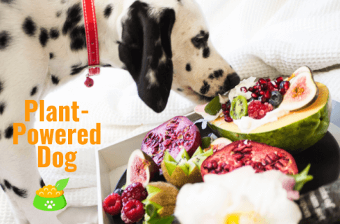 Plant-Powered Dog