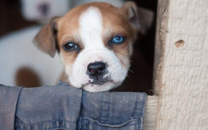 Plant-Powered Dog Food Summit