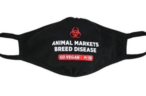 Animal Markets Breed Disease Face Mask